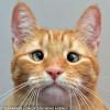 Jarvis, el gato bizco que fue abandonado por su dueño