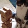 Un gato juega al jenga sin derrumbar la torre