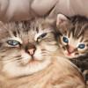 Los mejores selfies de perros, gatos y más animales