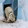 Los 25 momentos madre e hijo más adorables del mundo animal