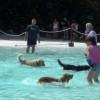 Primer parque acuático para perros en España