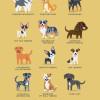 200 razas de perro clasificadas según su país de origen