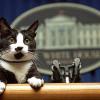Adiós a un gato que, sin buscarlo, conoció el poder y la fama
