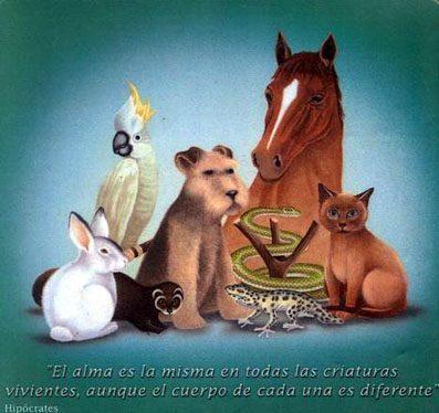 alma-en-los-animales.jpg