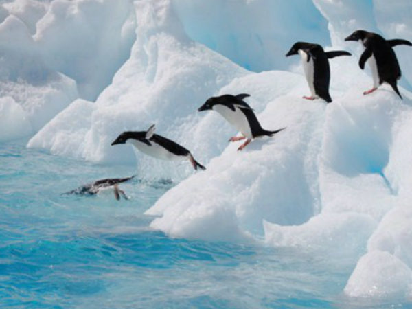 pinguino-saltando