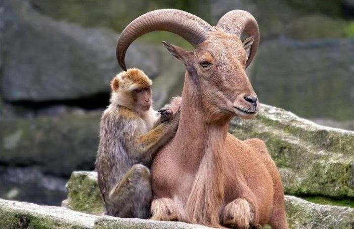 Comunicacion animal