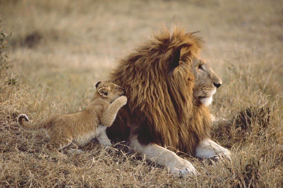 Comunicacion leones