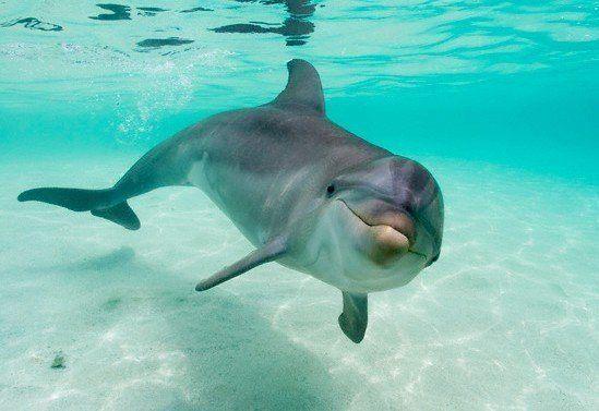 Delfin, como se comunican
