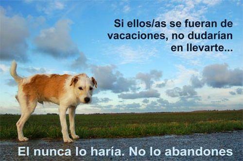 Campañas contra el abandono de mascotas, se suceden año tras año