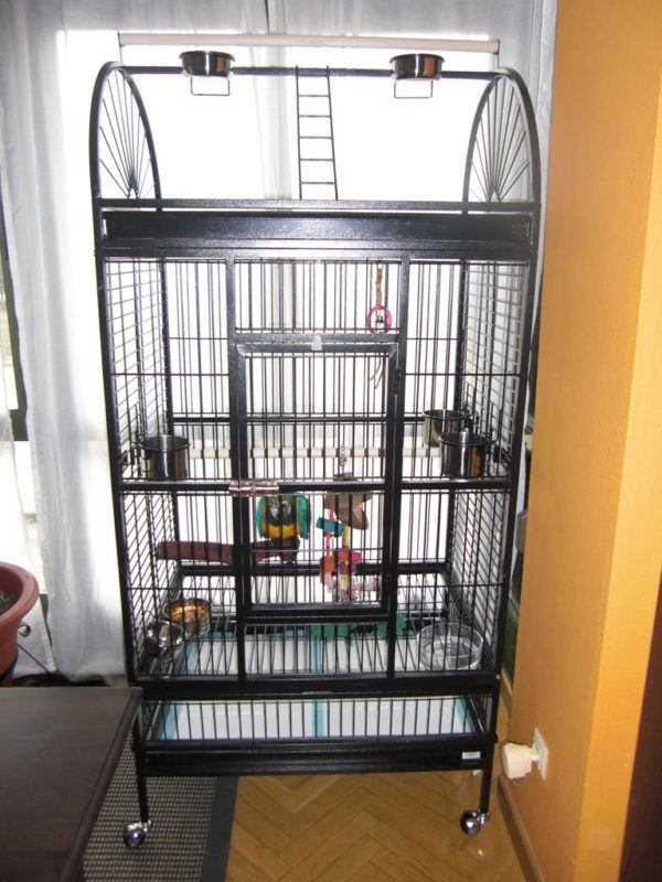 comparte-la-vida-con-tus-mascotas-aves-jaulas
