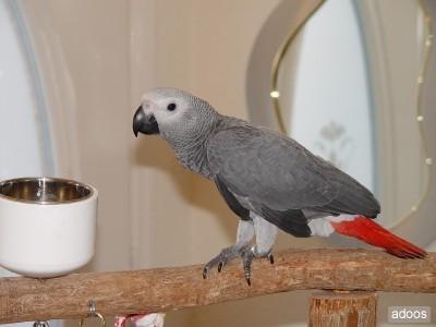 comparte-la-vida-con-tus-mascotas-aves-sueltas