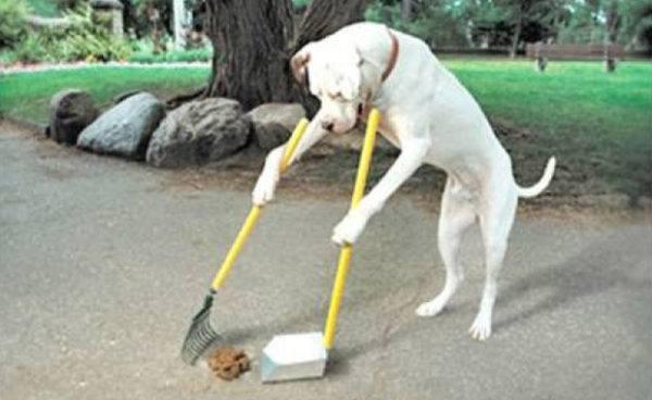 comparte-la-vida-con-tus-mascotas-cacas