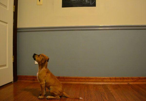 la-responsabilidad-de-tener-una-mascota-espera