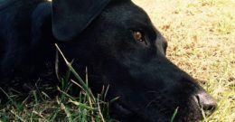 Mascotas – Cuidados, Fotos y Animales Domésticos para Niños