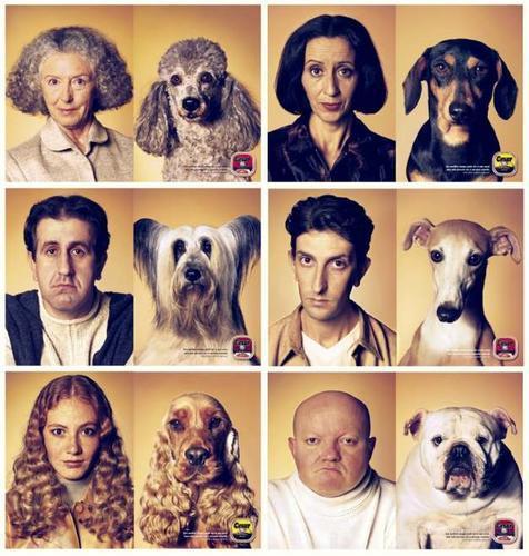 los perros entienden 150 palabras y pueden contar hasta guau5 Perros-parecidos-a-sus-duenos1