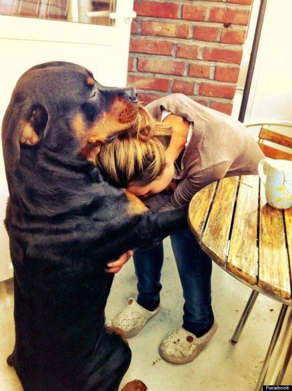 comunicacion con mascotas