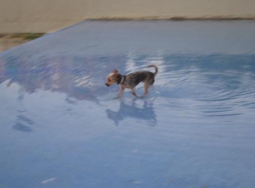 jugando-en-la-piscinabegona-sastre.jpg