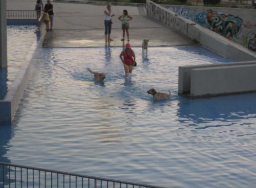 Las piscinas de España en dónde se pueden bañar con perros
