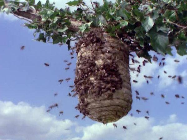 abejas-colmena