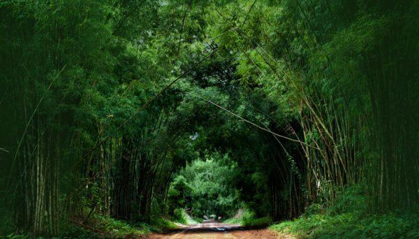 oso-panda-panda-gigante-bosque-bambu