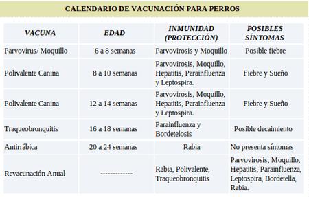 calendario-vacunación-perros