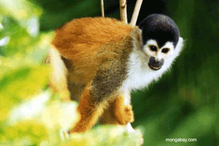 Las 10 mascotas exóticas de moda