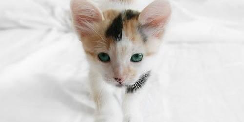 Nombres curiosos y extraños para mascotas