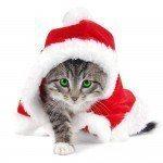 postales-de-animales-para-navidad-gato-papa-noel