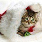 postales-de-animales-para-navidad-gato-papanoel