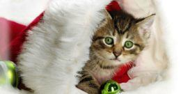 Postales de animales para Navidad 2017