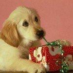 postales-de-animales-para-navidad-perro-abriendo-regalo