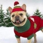 postales-de-animales-para-navidad-perro-disfraz-elfos