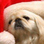 postales-de-animales-para-navidad-perro-papa-noel