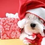 postales-de-animales-para-navidad-perro-papanoel