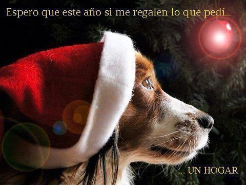 postales-de-animales-para-navidad-perro-regalo