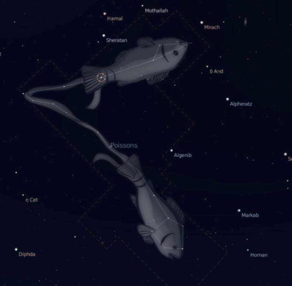 el-horoscopo-tambien-permite-conocer-la-personalidad-de-nuestros-perros-piscis