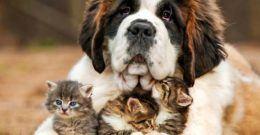 Animales- Cómo influye el Horóscopo de los Animales en su Personalidad (Perros y Gatos)
