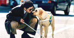 Perros Guía – Razas, Precios y Entrenamiento (Discapacidad Visual)