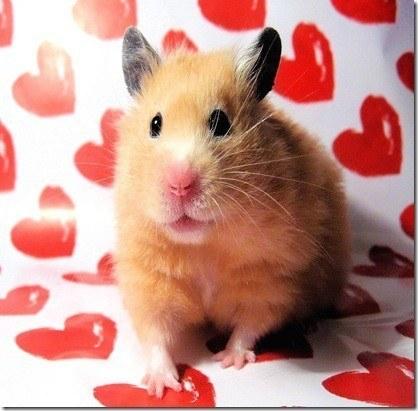 hamster4