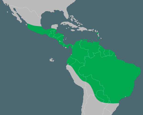 iguana-mapa