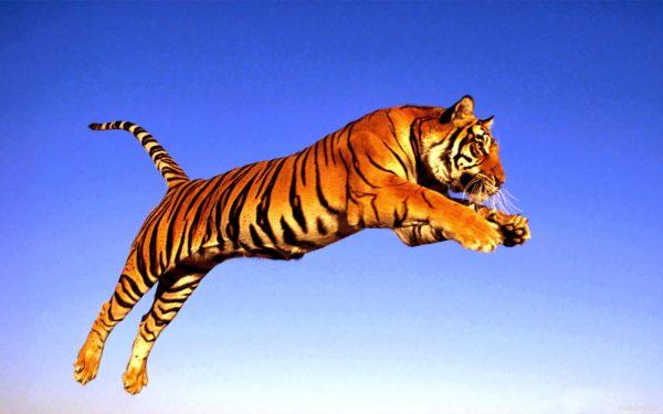 las-mejores-fotos-de-tigres-foto-9