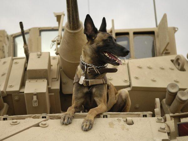 perro guerra