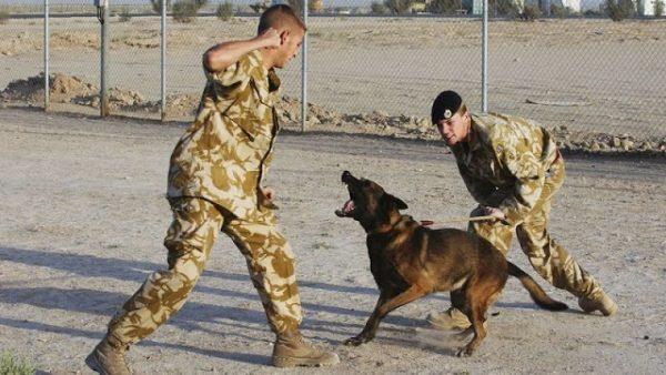 perros guerra
