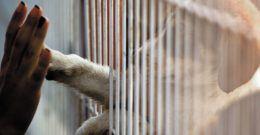 Adopción de Perros – Requisitos, Pasos y Precio