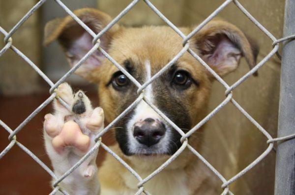 perros adopcion