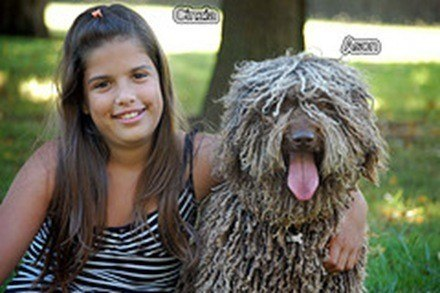 Perro de agua español, fotos, razas de perros 5.