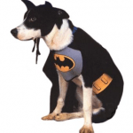 Disfraces para perros Halloween 2009 batman