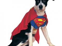 Disfraces para perros | Halloween 2014