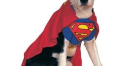 Disfraces para perros y dónde comprarlos | Carnaval 2018 y Halloween