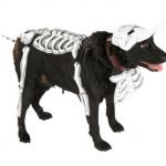 Disfraces para perros Halloween 2009_calavera
